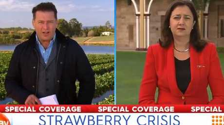 Karl Stefanovic covering the strawberry crisis on the Today Show
