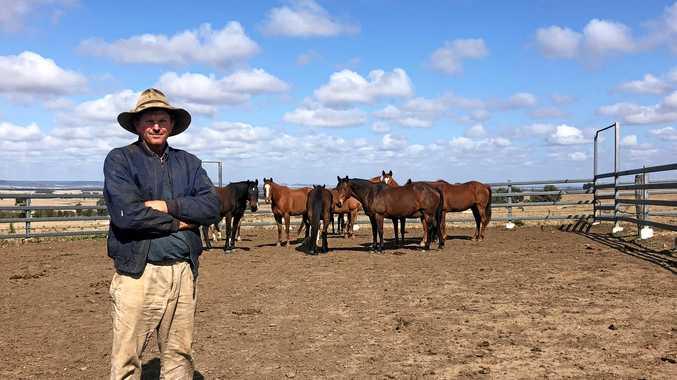 Cattle highlight a 'broken' system