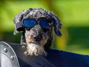 65 of the Coast's cutest, best dressed pets