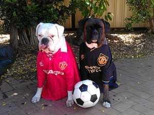 Ipswich's fashion hounds