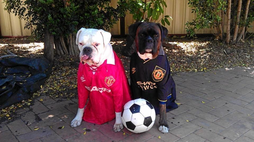 Ice and Turbo in Man Utd jerseys.