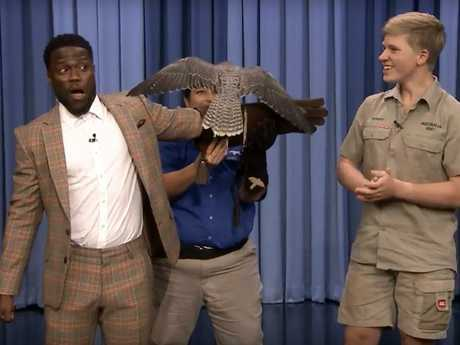 Kevin Hart eventually plucked up the courage to hold Robert Irwin's falcon.