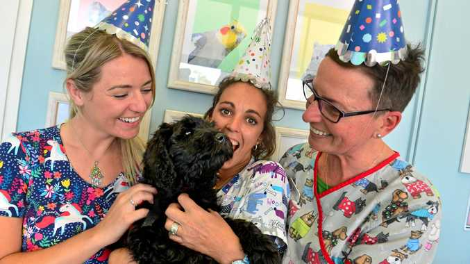 BEST FRIENDS: Currimundi Vet Clinic's celebrate their first birthday by raising funds for Compass Assistance Dogs charity. Picutred: Lisa Waters, Tash Hamilton, Sue Botha and Toddy.
