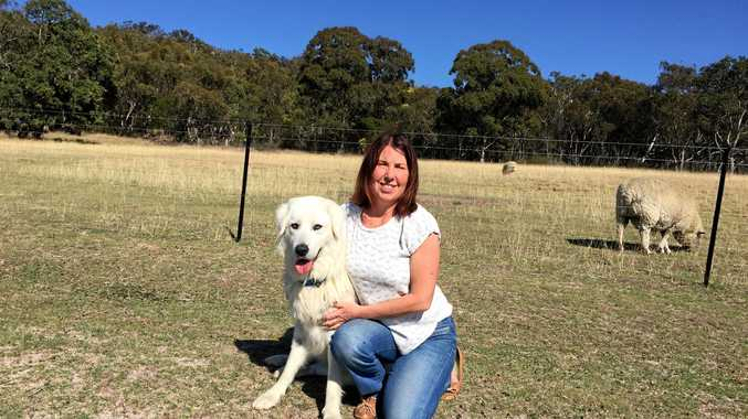 PROTECTIVE: Marion Carrick credits her two maremma digs with preventing wild dog attacks on her animals.