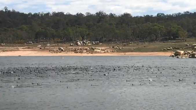 WATCH: 'Never before seen' wildlife sight at Leslie Dam