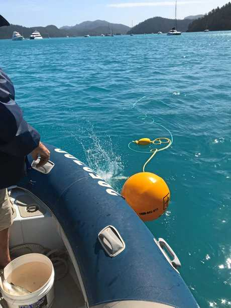 Drum lines being deployed at the Whitsundays for the first time after two shark attacks.