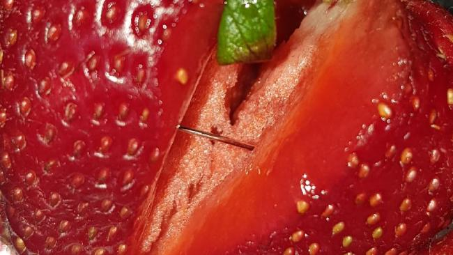 A needle found in a strawberry purchased from Foodland in Jamestown. Picture: Supplied.
