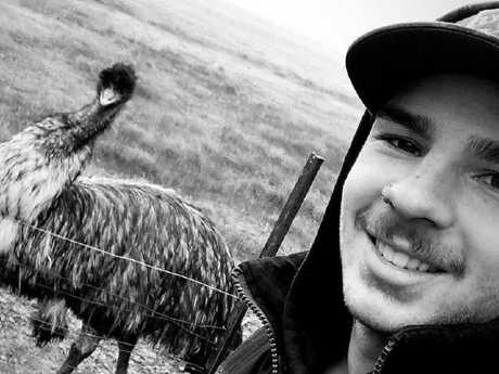 Man arrested over video of emus being hit by vehicle