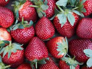 Police arrest woman over strawberry contamination