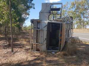 Cattle escape after truck rollover west of Maryborough
