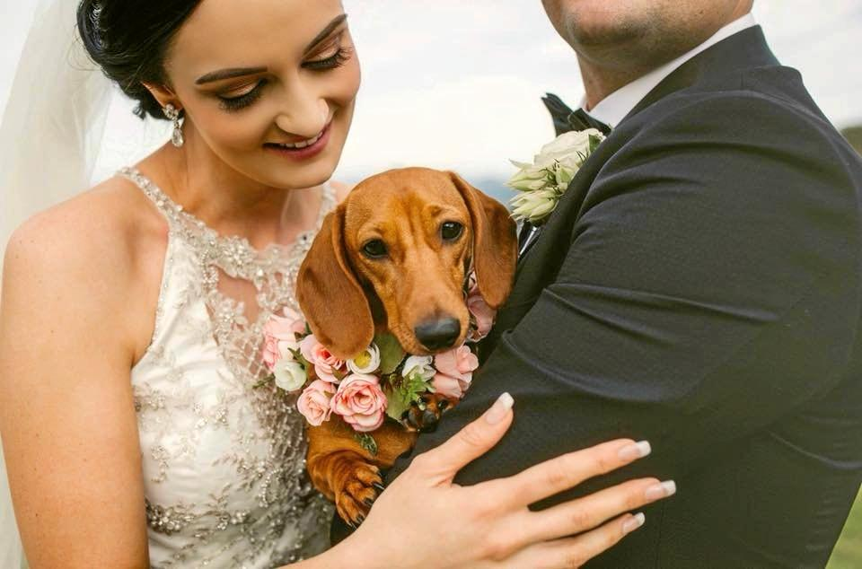 BARKING ADORABLE: Little Dachshund Daisy was the flower girl at her owners wedding.