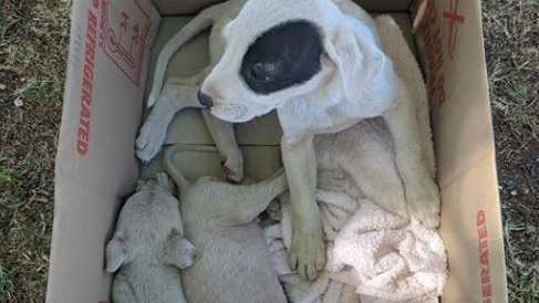 Emaciated puppies found dumped in box