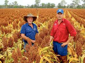 New options growing the future of North Burnett agriculture