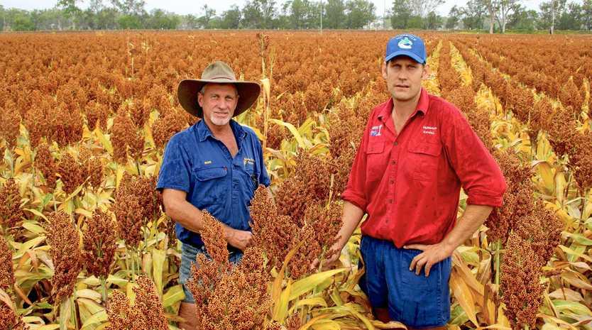 GROWERS: Monto pulse crop grower Russ Salisbury and agronomist Kendall Muller.
