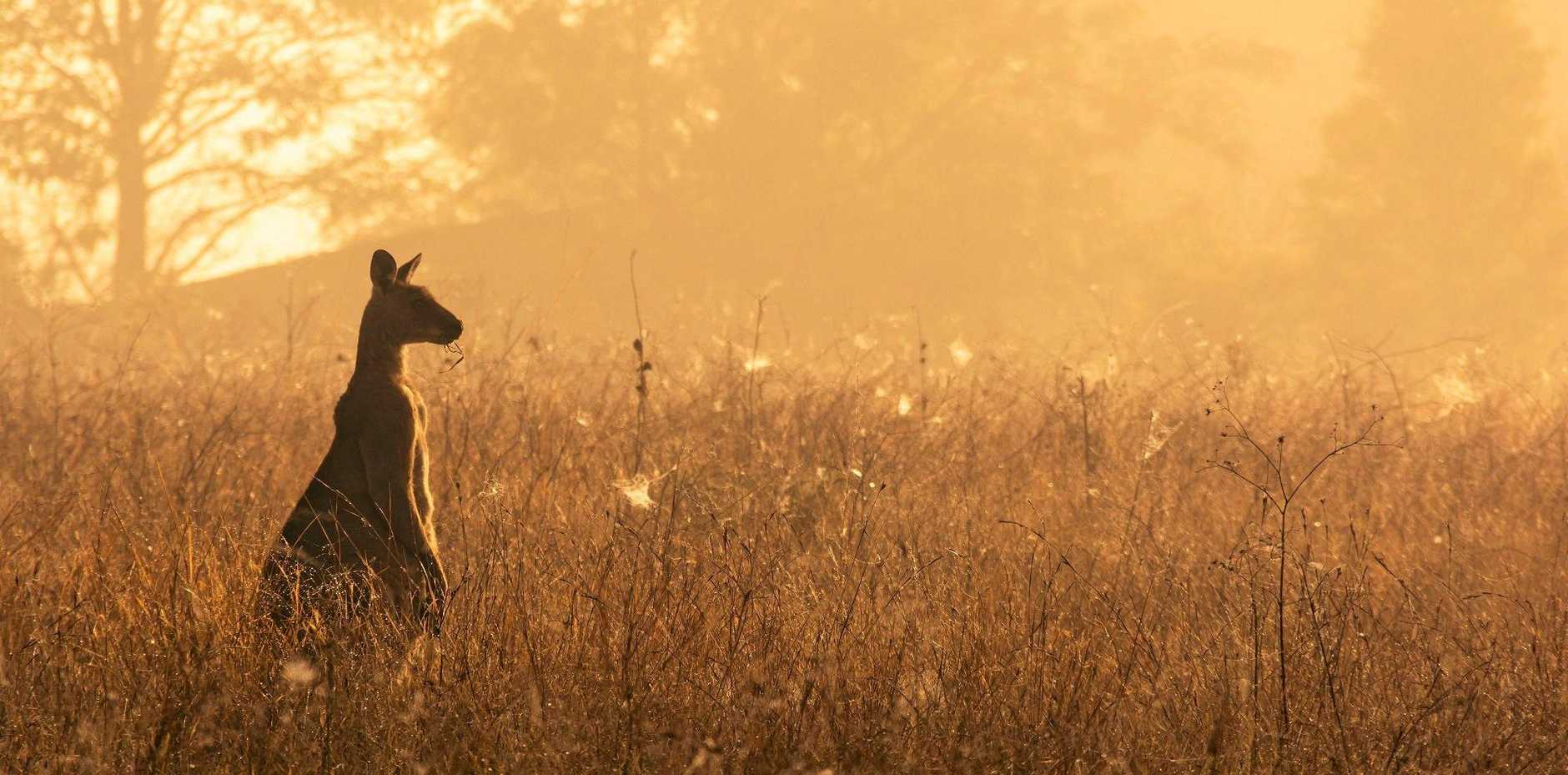 Lazy Hazy Afternoon , winner of the Native Wildlife Category.