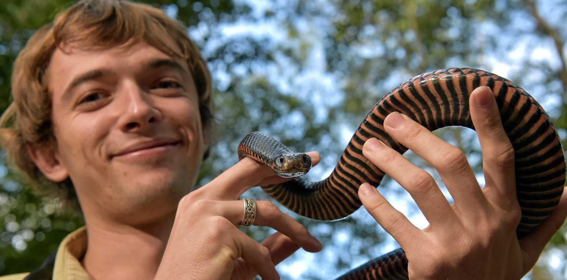 Noosa snake catcher Luke Huntley holding his pet red belly black snake, Russell.