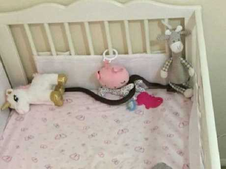 A brown snake climbed in through Sophie's bedroom window. Picture: 9News