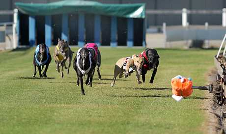 Greyhounds race at the former Border Park raceway.