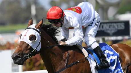 Arbeitsam and Tim Clark will team up to tackle the Epsom mile on Saturday. Picture: AAP Image