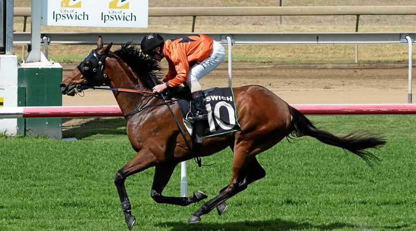Today's scheduled Ipswich race meeting may be transferred to Monday after an irrigation system malfunction caused problems.