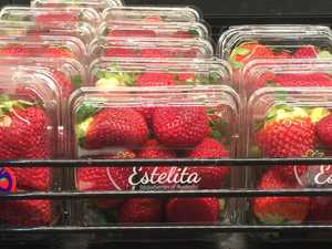 PM visits Queensland to address strawberry crisis