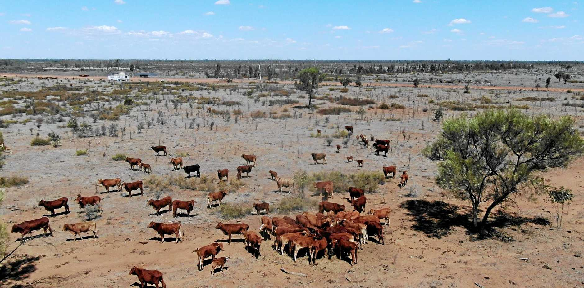 Tom Sparrow captured these drone images of his family's property, Malden, outside of Alpha. The footage shows how dry it is as the farmers feed the cattle hay with little to no grass cover.