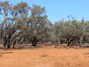 Help shape Queensland's Drought Program