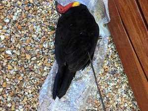 Hunt for turkey killer as more targeted in 'horrific' attack