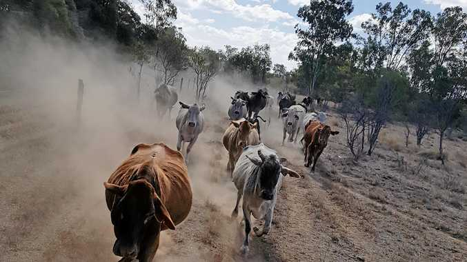 DESPERATE: Dry conditions seen in the Central Highlands but the area has still not been declared officially in drought.