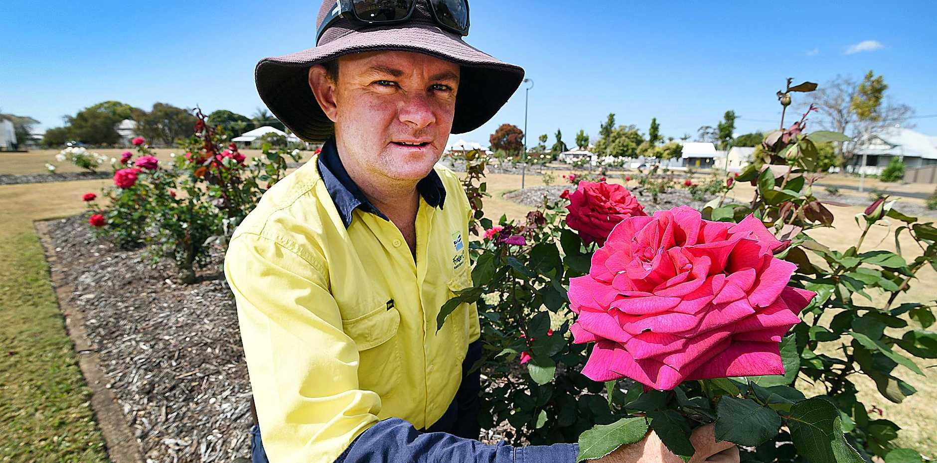 ONLY LOOKING: Brad Watts (team leader for horticulture in the parks in Maryborough) with one of the many roses in flower.