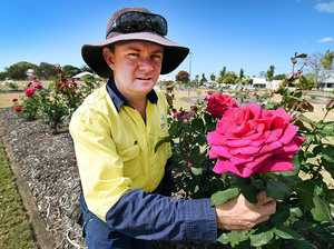 Smell, but don't touch: Council's warning to rose pluckers