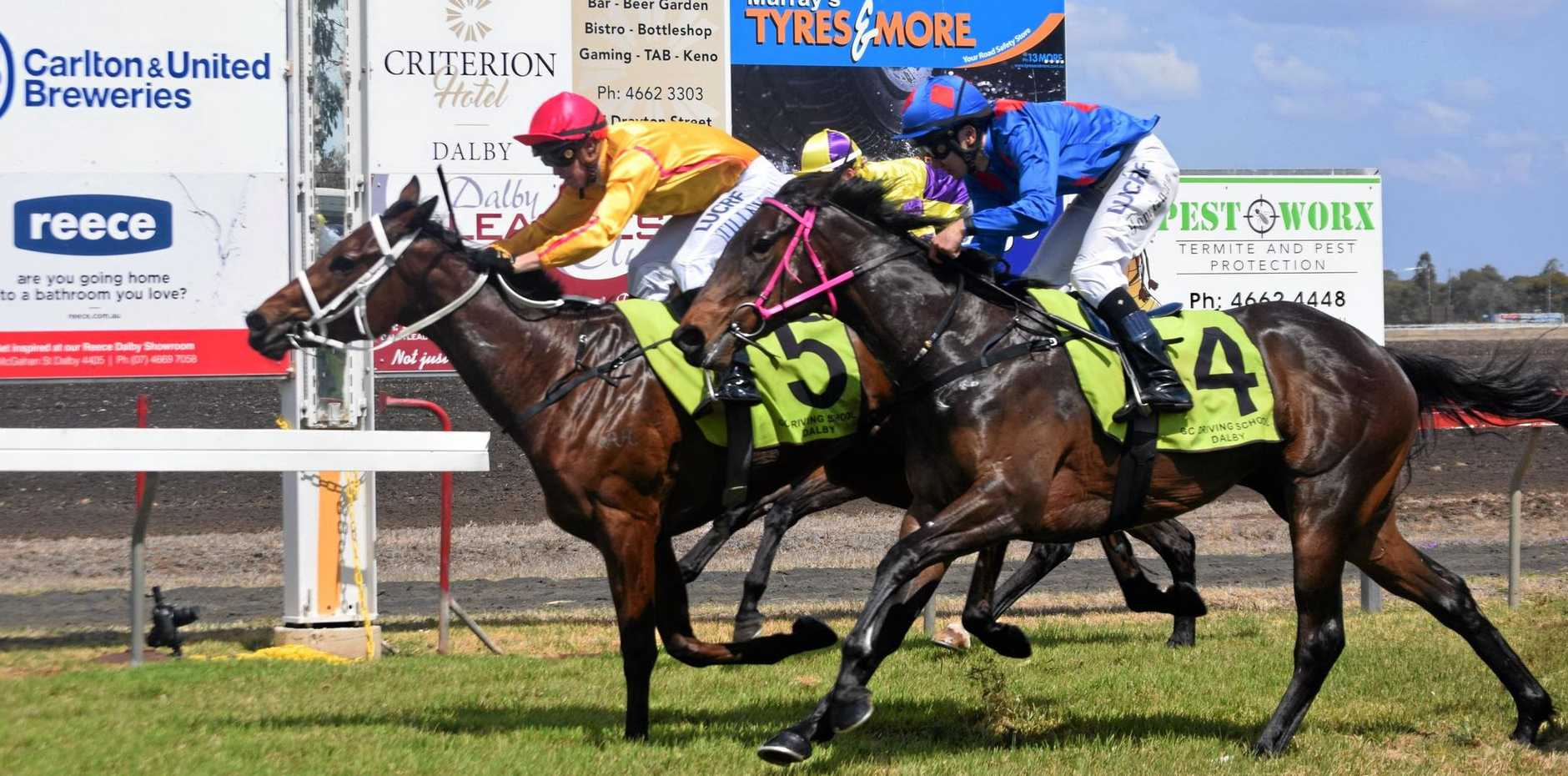 FIRST WIN: Gold Epaulette beats Bondage by a neck in the opening race at Dalby.