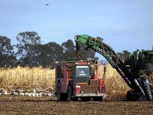 CANED: Sugar industry hit with Indian dumping
