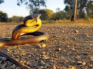Man hospitalised after snake bite in CQ
