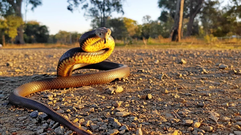 Generic snake