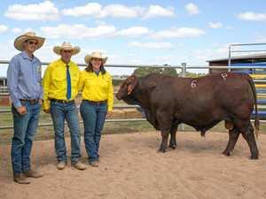 Bull sale bucks records