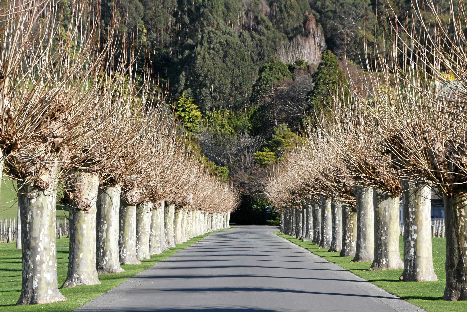 The entrance to Mission Estate Winery at Taradale, Hawkes Bay.