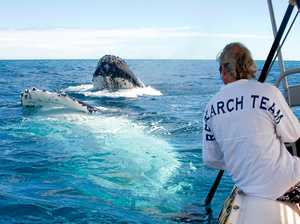Marine experts head to Hervey Bay for world whale conference