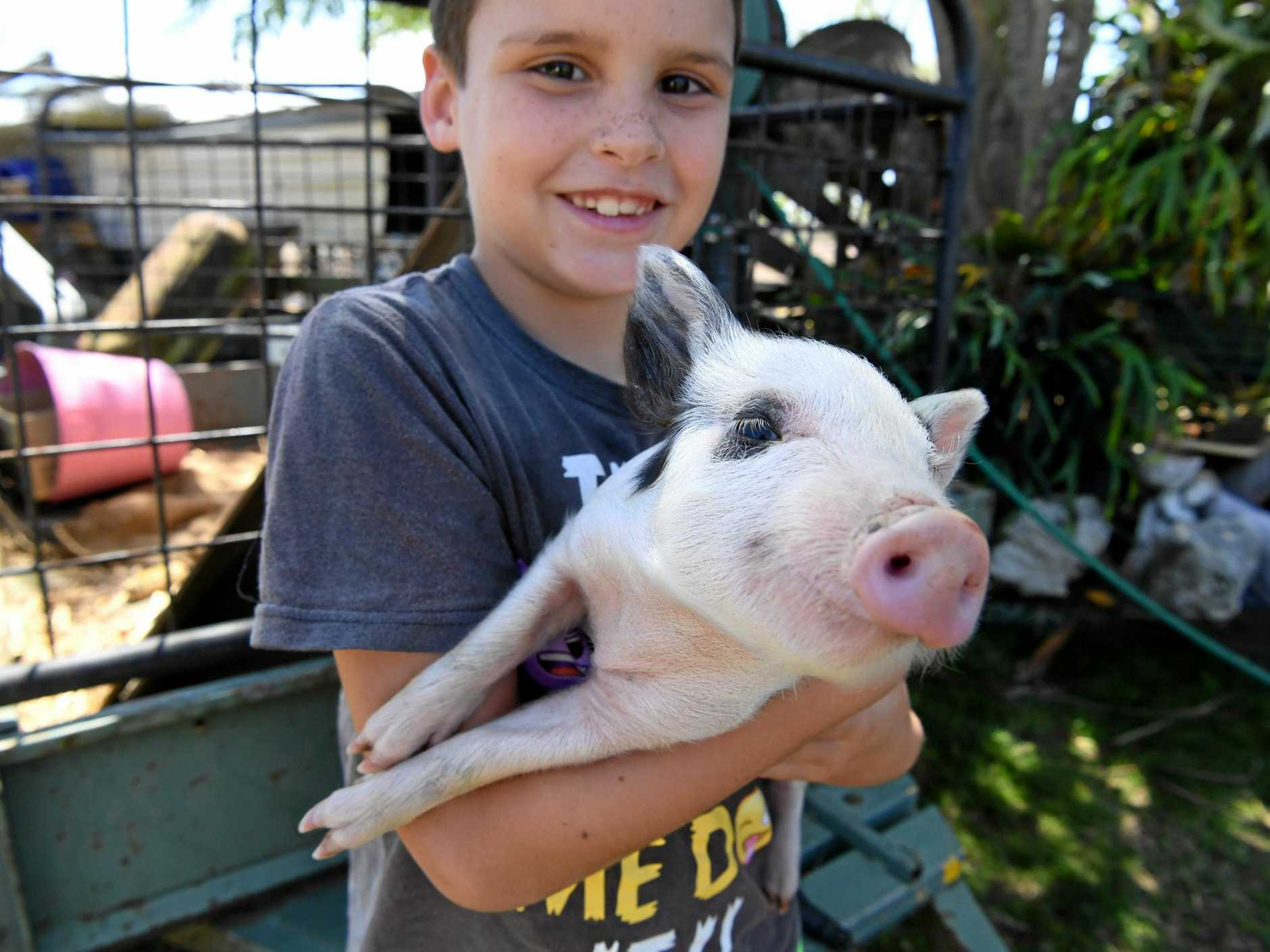 BACK HOME: Kahn Hughes reunited with Peppa the piglet.