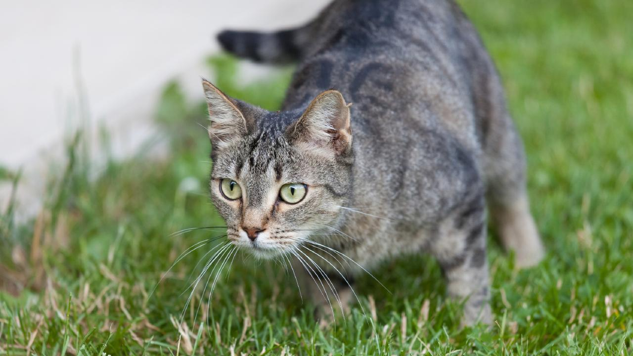 The proposed rules would see domestic cats locked up for good. Picture: iStock