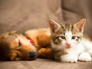 Search is on for Toowoomba's cutest puppy and kitten