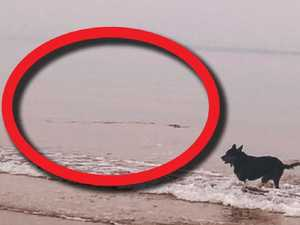 Big croc stalks family dog at Darwin beach