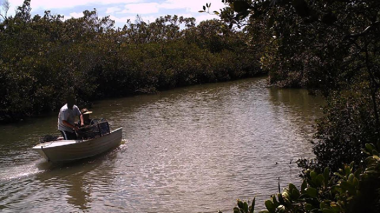 The Logan  River where taking crabs and prawns has been banned after the outbreak of white spot disease.