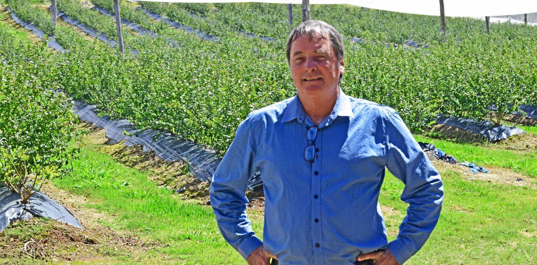 Australian Blueberry Growers' Association executive director Alex Smith.