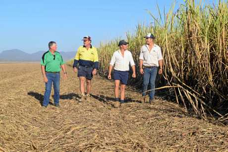Farm manager Shane Butler, Peter Faust and sons Peter and Matt Faust walk through cane fields on their farm in Proserpine.