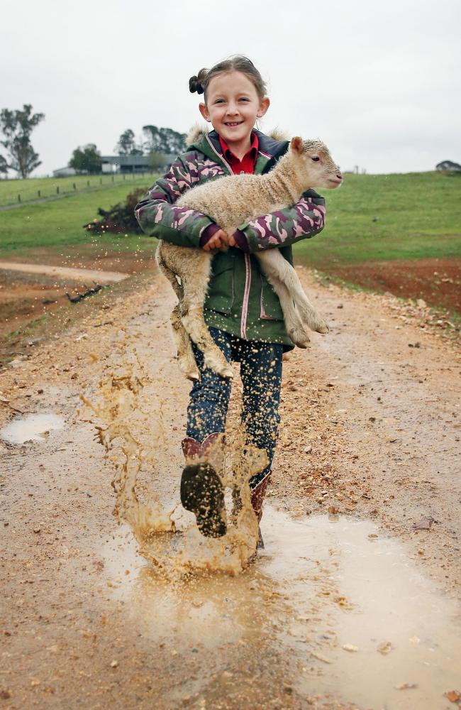 Isabella Owens, 8, with her favourite lamb on her dad's property near Bathurst. Picture: Richard Dobson