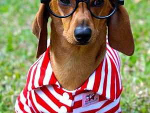 GALLERY: Mackay's cutest and best dressed pets