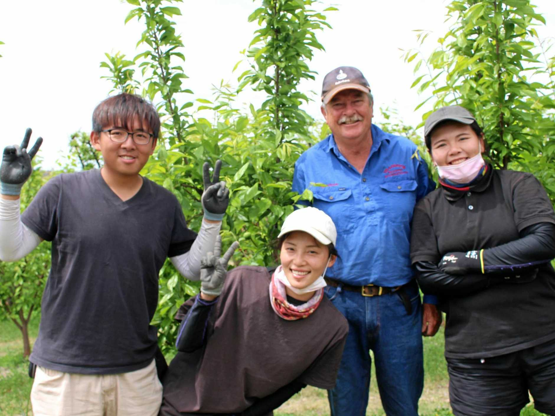 ON FARM: Second-time backpackers Wonka Yen, Paphy Po and Kim Yung with farmer Graham Finlay.