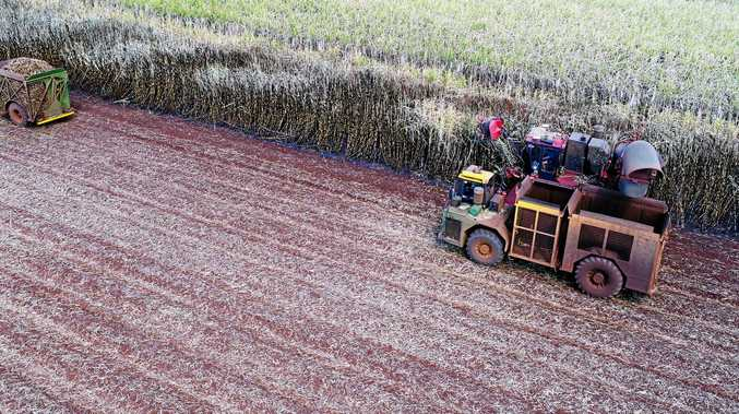 END IS NEAR: Bundaberg's cane crush season looks like it will come to an early end.