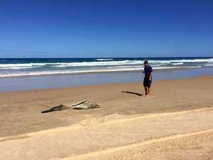 SEARCH: Sick seal missing on our beaches